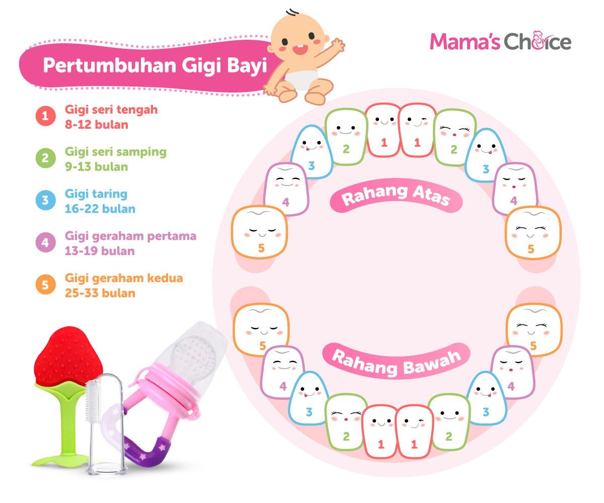 kapan usia dan urutan bayi tumbuh gigi