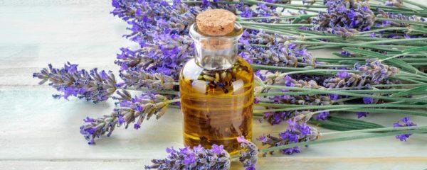 1000 manfaat minyak lavender