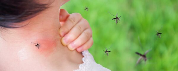 pengusir nyamuk alami, bahan alami pengusir nyamuk, pengusir nyamuk alami untuk bayi